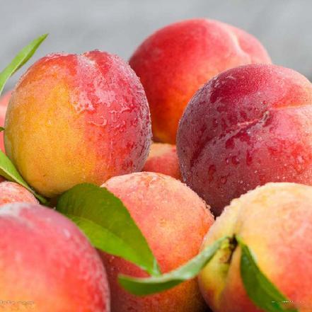 优质北京水蜜桃 约3个/斤