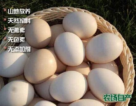 虫草土鸡蛋48粒