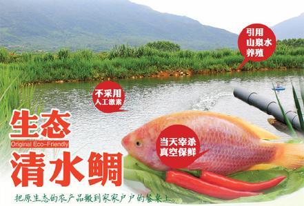 厦门大学望鹏生态清水鲷 生长周期1年半以上 活鱼现杀真空包装
