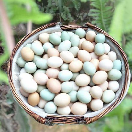 [原生态]翔安土鸡蛋15枚/盒 不打针无激素0抗生素,孩子健康的保障。