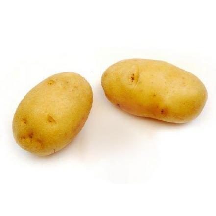 精品土豆(大个)