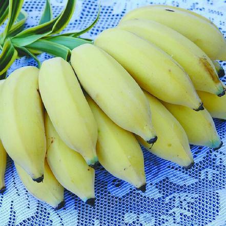 米蕉 1斤约2-3个
